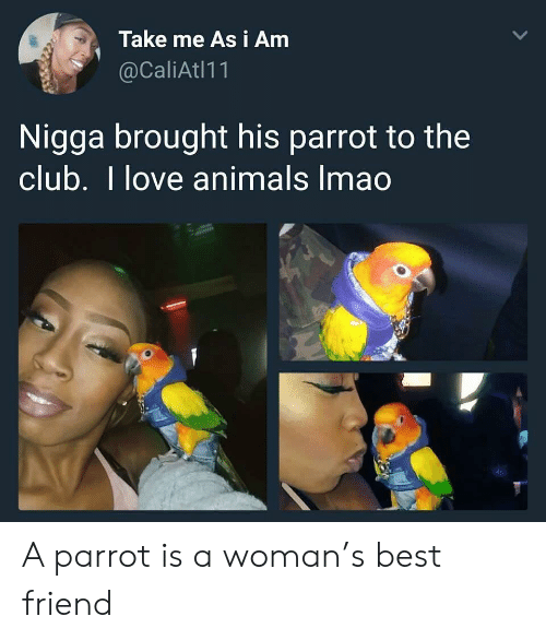 I Love Animals: Take me As i Amm  @CaliAtl11  Nigga brought his parrot to the  club. I love animals Imao A parrot is a woman's best friend