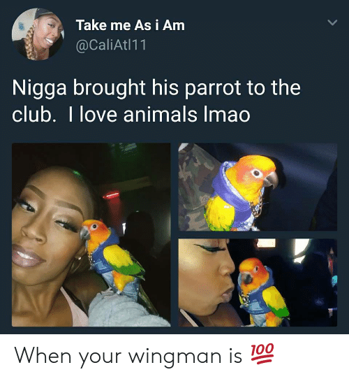 I Love Animals: Take me As i Amm  @CaliAtl11  Nigga brought his parrot to the  club. I love animals Imao When your wingman is 💯