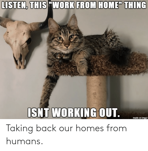 Our: Taking back our homes from humans.