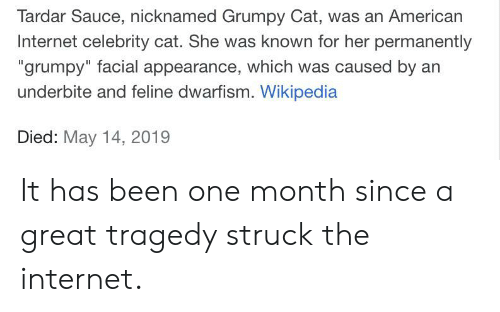 """Tardar Sauce: Tardar Sauce, nicknamed Grumpy Cat, was an American  Internet celebrity cat. She was known for her permanently  """"grumpy"""" facial appearance, which was caused by an  underbite and feline dwarfism. Wikipedia  Died: May 14, 2019 It has been one month since a great tragedy struck the internet."""