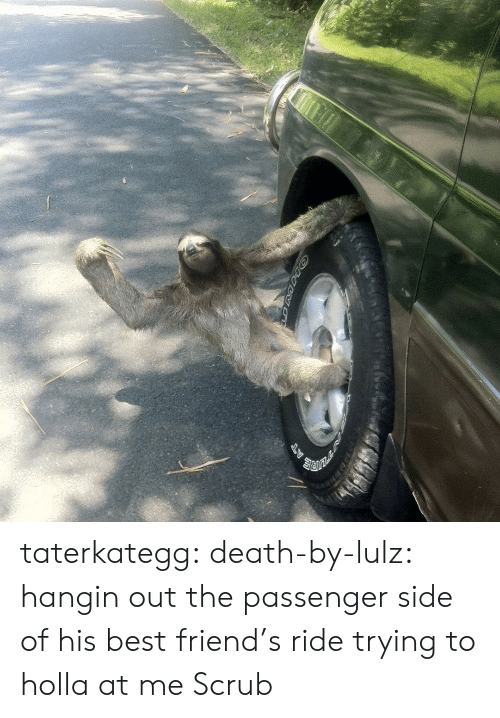 holla: taterkategg: death-by-lulz: hangin out the passenger side of his best friend's ride trying to holla at me  Scrub