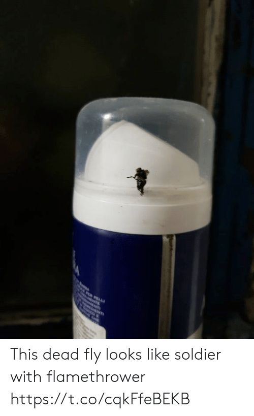 soldier: TE This dead fly looks like soldier with flamethrower https://t.co/cqkFfeBEKB