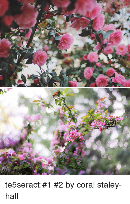 Tumblr, Blog, and Flickr: te5seract:#1  #2 by  coral staley-hall