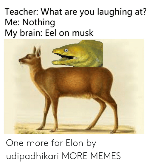 Dank, Memes, and Target: Teacher: What are you laughing at?  Me: Nothing  My brain: Eel on musk One more for Elon by udipadhikari MORE MEMES