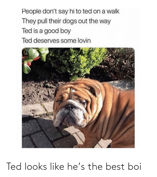 Ted: Ted looks like he's the best boi
