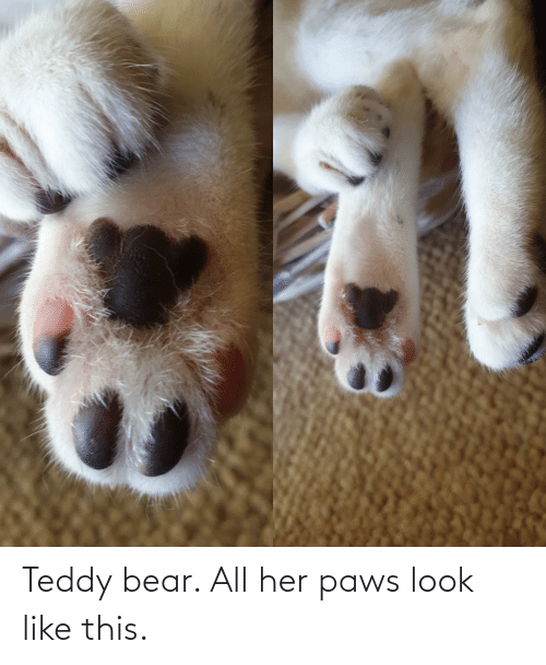 Paws: Teddy bear. All her paws look like this.