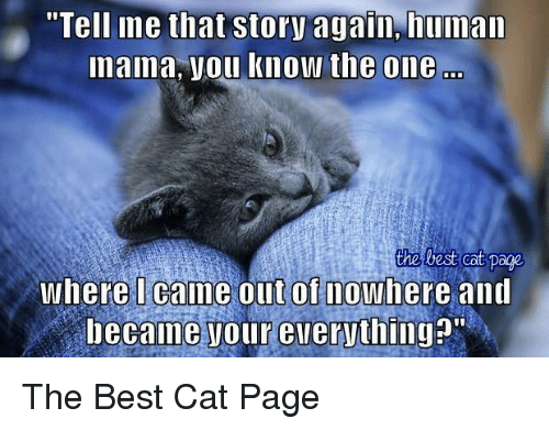 """Memes, Best, and Test: """"Tell ine that story again, human  naima, you know the one  test cat page  Where I came out of nowhere and  became our everything?"""" The Best Cat Page"""