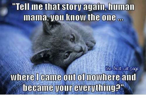 """Memes, Best, and Humanity: """"Tell ine that story again, human  nama, Vou know the one  the best Cat Page  Where I came out of nowhere and  became Tour everything?"""""""