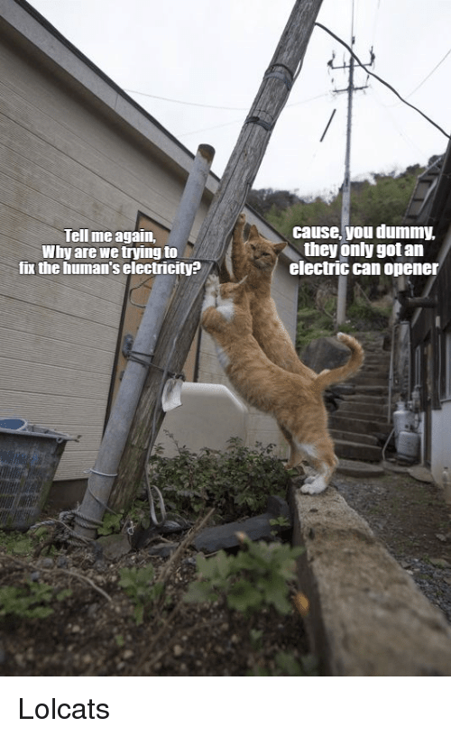 LOLcats, Got, and Electricity: Tell me again,  Why are we trying to  fix the human's electricity?  cause, you dummy,  they only got an  electric can opener Lolcats