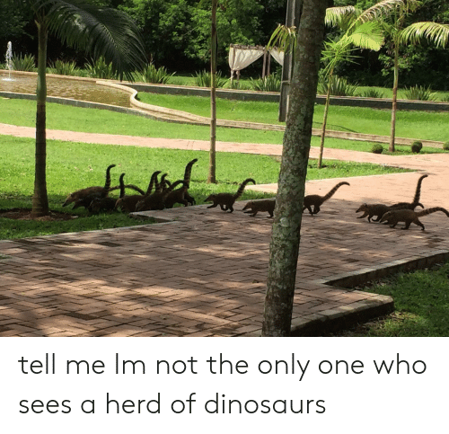not the only one: tell me Im not the only one who sees a herd of dinosaurs