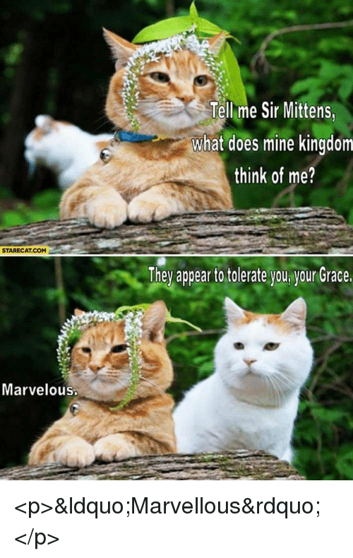 Marvelous: Tell me Sir Mittens  what does mine kingdom  think of me?  STARECAT.COM  They appea to tolerate you ygur Grace  Marvelous <p>&ldquo;Marvellous&rdquo;</p>