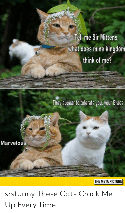 Marvelous: Tell me Sir Mittens  what does mine kingdom  think of me?  Thev appear to tolerate vou vour Grace  Marvelous.  THE META PICTURE srsfunny:These Cats Crack Me Up Every Time