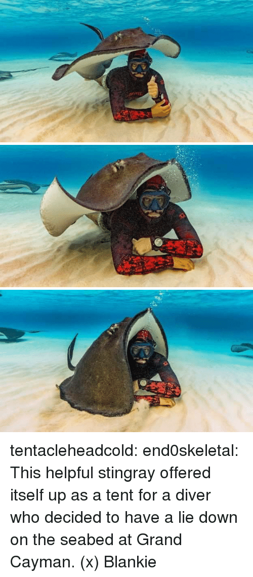 Tumblr, Blog, and Http: tentacleheadcold:  end0skeletal:   This helpful stingray offered itself up as a tent for a diver who decided to have a lie down on the seabed at Grand Cayman. (x)  Blankie