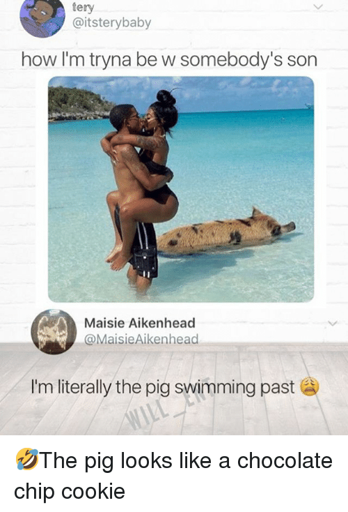 Maisie: tery  @itsterybaby  how I'm tryna be w somebody's son  Maisie Aikenhead  MaisieAikenhead  Im literally the pig swimming past 🤣The pig looks like a chocolate chip cookie