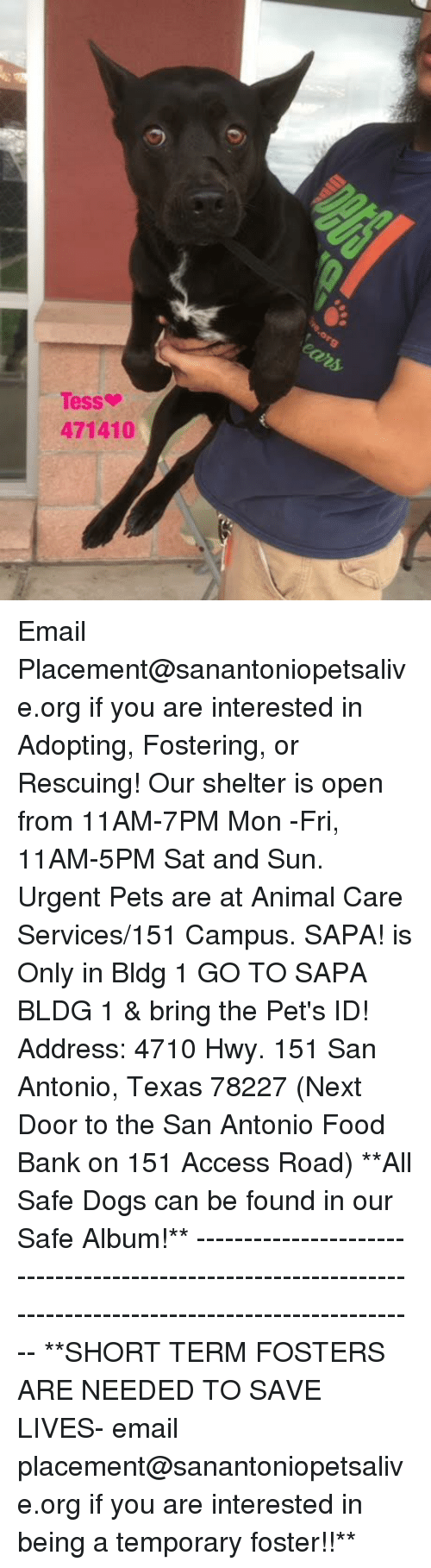 Dogs, Food, and Memes: Tess  471410 Email Placement@sanantoniopetsalive.org if you are interested in Adopting, Fostering, or Rescuing!  Our shelter is open from 11AM-7PM Mon -Fri, 11AM-5PM Sat and Sun.  Urgent Pets are at Animal Care Services/151 Campus. SAPA! is Only in Bldg 1 GO TO SAPA BLDG 1 & bring the Pet's ID! Address: 4710 Hwy. 151 San Antonio, Texas 78227 (Next Door to the San Antonio Food Bank on 151 Access Road)  **All Safe Dogs can be found in our Safe Album!** ---------------------------------------------------------------------------------------------------------- **SHORT TERM FOSTERS ARE NEEDED TO SAVE LIVES- email placement@sanantoniopetsalive.org if you are interested in being a temporary foster!!**