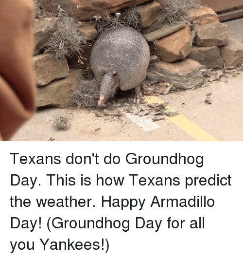 groundhog: Texans don't do Groundhog Day. This is how Texans predict the weather. Happy Armadillo Day! (Groundhog Day for all you Yankees!)