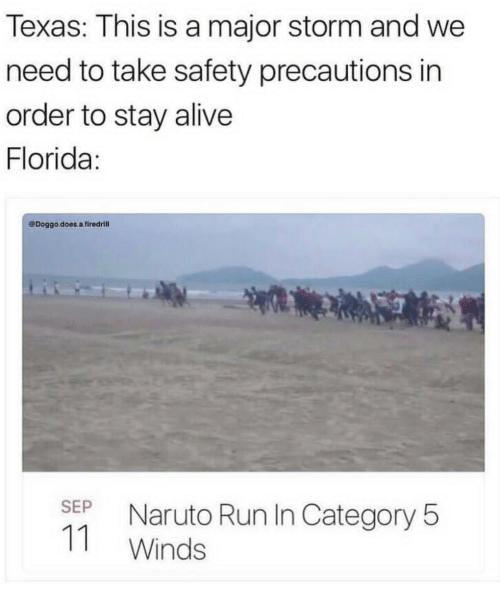 Doggo Does A: Texas: This is a major storm and we  need to take safety precautions in  order to stay alive  Florida  @Doggo.does.a.firedrill  SEP Naruto Run In Category 5  11 Winds