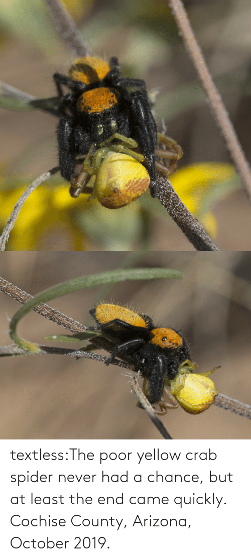 Arizona: textless:The poor yellow crab spider never had a chance, but at least the end came quickly.  Cochise County, Arizona, October 2019.