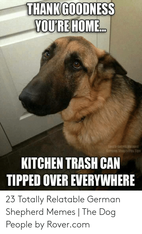 Memes, Trash, and German Shepherd: THANK GOODNESS  YOU'RE HOME...  LOura-Jaues Maynes  German Shepherds Tips  KITCHEN TRASH CAN  TIPPED OVER EVERYWHERE 23 Totally Relatable German Shepherd Memes | The Dog People by Rover.com
