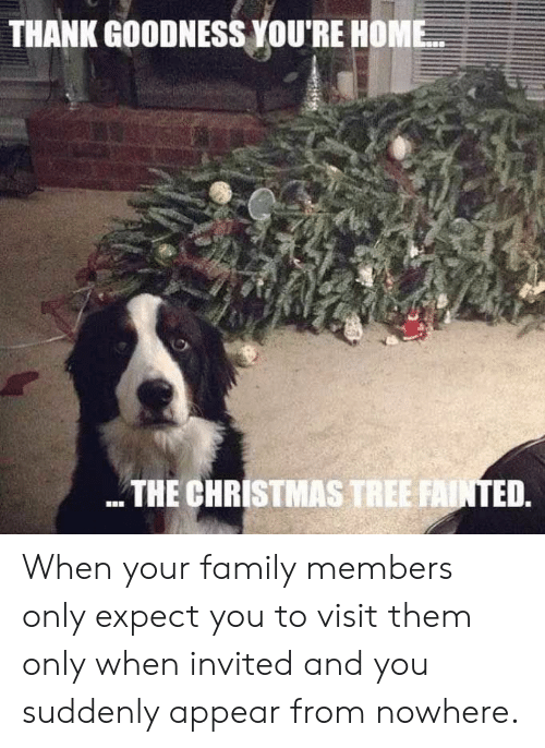 goodness: THANK GOODNESS YOU'RE HOME  THE CHRISTMAS TREE FAINTED. When your family members only expect you to visit them only when invited and you suddenly appear from nowhere.