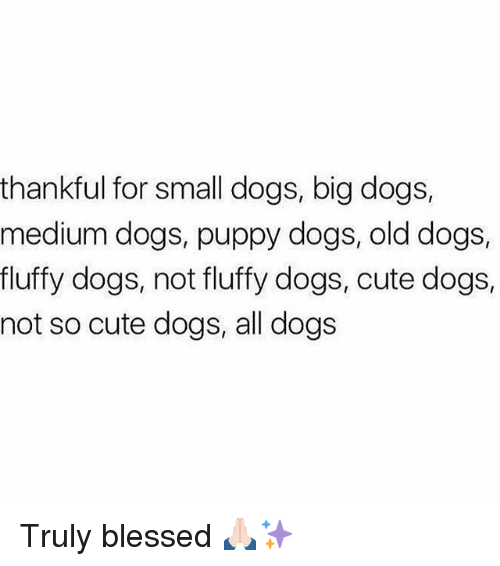 cute dogs: thankful for small dogs, big dogs,  medium dogs, puppy dogs, old dogs,  fluffy dogs, not fluffy dogs, cute dogs,  not so cute dogs, all dogs Truly blessed 🙏🏻✨