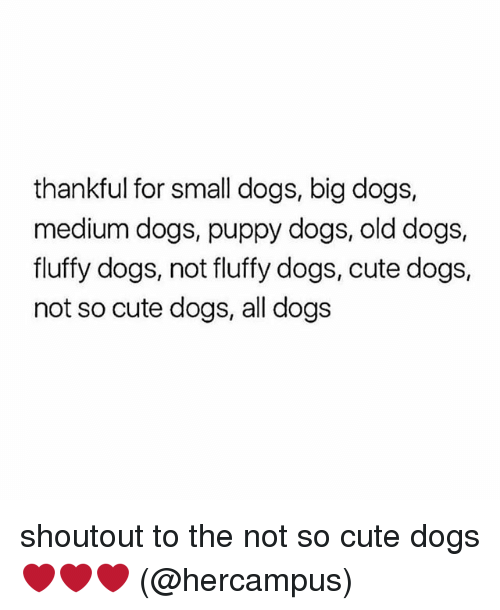 cute dogs: thankful for small dogs, big dogs,  medium dogs, puppy dogs, old dogs,  fluffy dogs, not fluffy dogs, cute dogs,  not so cute dogs, all dogs shoutout to the not so cute dogs ❤️❤️❤️ (@hercampus)