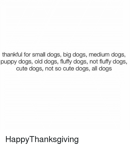 Cute, Dogs, and Memes: thankful for small dogs, big dogs, medium dogs,  puppy dogs, old dogs, fluffy dogs, not fluffy dogs,  cute dogs, not so cute dogs, all dogs HappyThanksgiving