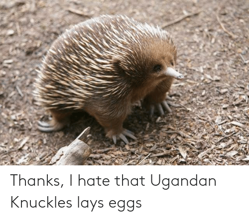 Lay's: Thanks, I hate that Ugandan Knuckles lays eggs