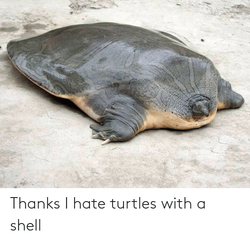 turtles: Thanks I hate turtles with a shell