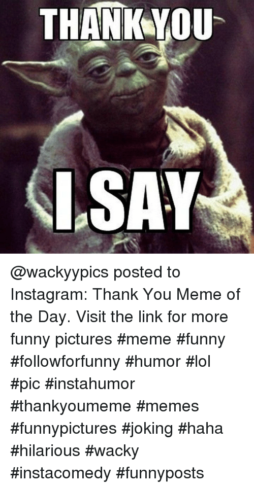 Thank You Meme: THANKYOU  SAY @wackyypics posted to Instagram: Thank You Meme of the Day. Visit the link for more funny pictures #meme #funny #followforfunny #humor #lol #pic #instahumor #thankyoumeme #memes #funnypictures #joking #haha #hilarious #wacky #instacomedy #funnyposts