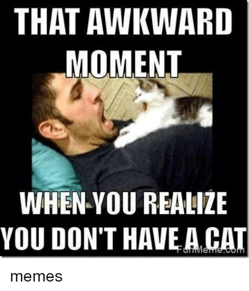 that awkward moment when: THAT AWKWARD  MOMENT  WHEN YOU REALIZE  YOU DON'T HAVE A CAT memes