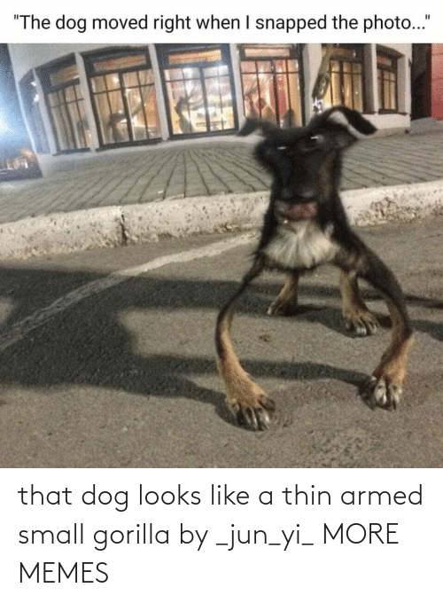 Like A: that dog looks like a thin armed small gorilla by _jun_yi_ MORE MEMES