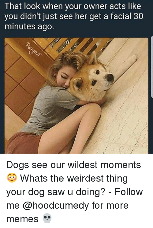 Dogs, Memes, and Saw: That look when your owner acts like  you didn't just see her get a facial 30  minutes ago Dogs see our wildest moments 😳 Whats the weirdest thing your dog saw u doing? - Follow me @hoodcumedy for more memes 💀