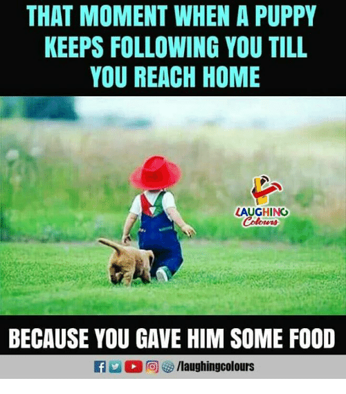 Food, Home, and Puppy: THAT MOMENT WHEN A PUPPY  KEEPS FOLLOWING YOU TILL  YOU REACH HOME  LAUGHING  BECAUSE YOU GAVE HIM SOME FOOD