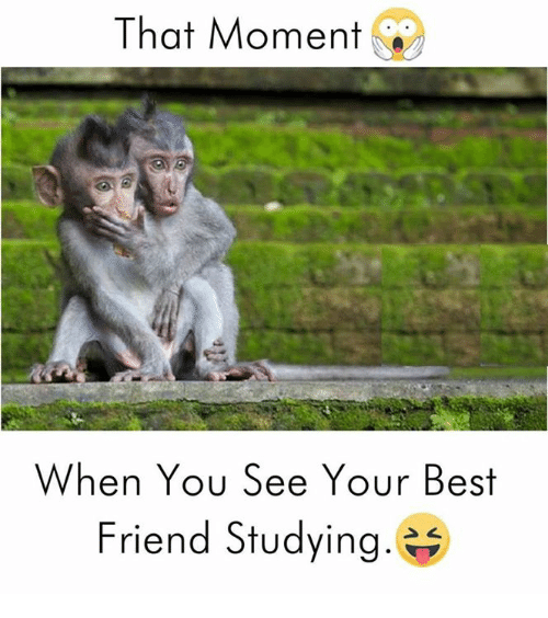 When You See Your Best Friend: That Moment  When You See Your Best  Friend Studying