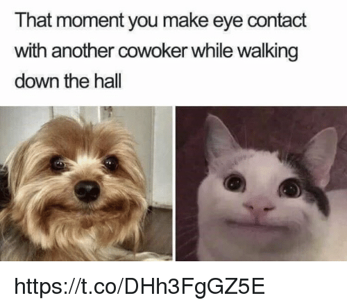 Memes, 🤖, and Another: That moment you make eye contact  with another cowoker while walking  down the hall https://t.co/DHh3FgGZ5E