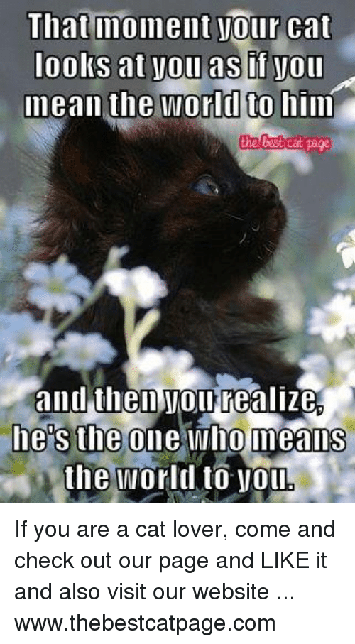 cat lover: That moment your cat  looks at yoll as if you  mean the world to him  the Cat page  and then you realize  he S the one who means  the World to VOL If you are a cat lover, come and check out our page and LIKE it and also visit our website ... www.thebestcatpage.com