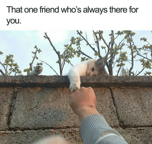 Memes, 🤖, and One: That one friend who's always there for  you.