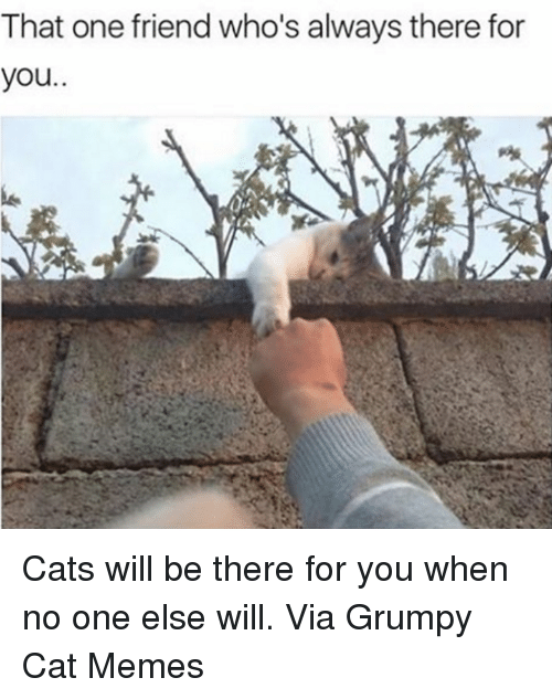 Grumpy Cats: That one friend who's always there for  you Cats will be there for you when no one else will. Via Grumpy Cat Memes