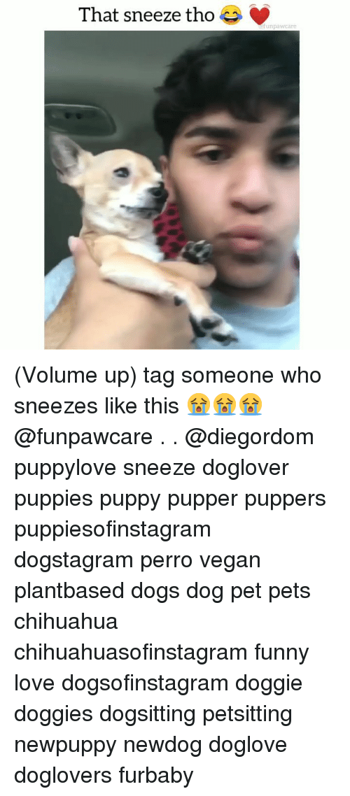 Chihuahua, Dogs, and Funny: That sneeze tho  unpawcare (Volume up) tag someone who sneezes like this 😭😭😭@funpawcare . . @diegordom puppylove sneeze doglover puppies puppy pupper puppers puppiesofinstagram dogstagram perro vegan plantbased dogs dog pet pets chihuahua chihuahuasofinstagram funny love dogsofinstagram doggie doggies dogsitting petsitting newpuppy newdog doglove doglovers furbaby