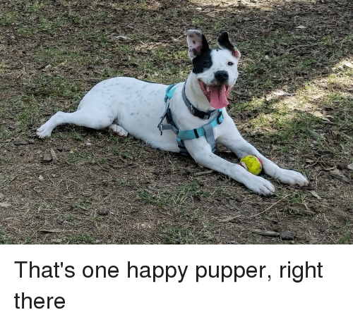 Happy, One, and Right: That's one happy pupper, right there