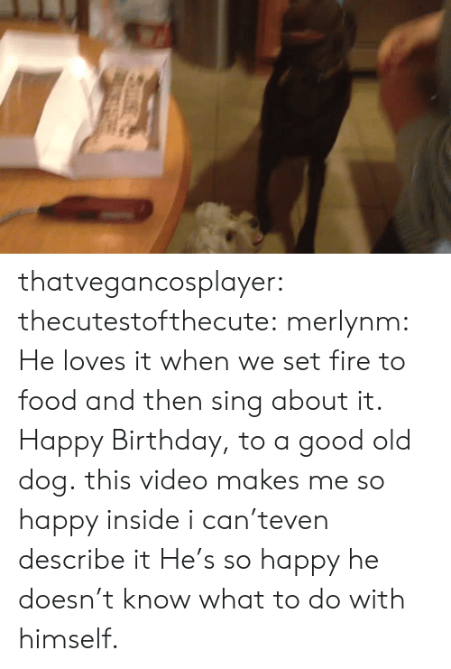 Birthday, Fire, and Food: thatvegancosplayer:  thecutestofthecute:  merlynm:  He loves it when we set fire to food and then sing about it. Happy Birthday, to a good old dog.  this video makes me so happy inside i can'teven describe it  He's so happy he doesn't know what to do with himself.