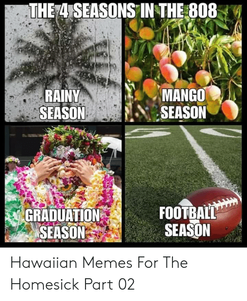 rainy: THE 4 SEASONS IN THE 808  RAINY  SEASON  MANGO  SEASON  FOOTBALL  SEASON  GRADUATION  SEASON Hawaiian Memes For The Homesick Part 02