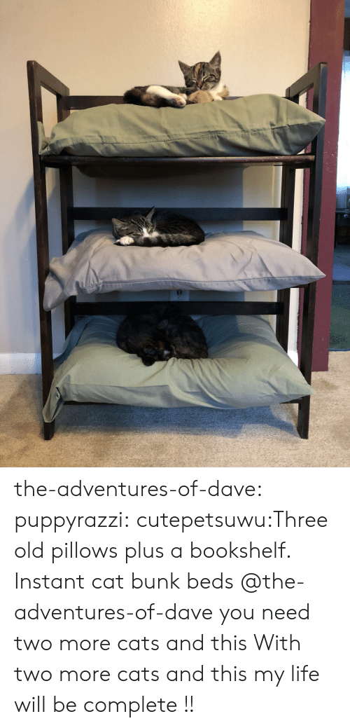 Plus: the-adventures-of-dave:  puppyrazzi:  cutepetsuwu:Three old pillows plus a bookshelf. Instant cat bunk beds  @the-adventures-of-dave you need two more cats and this  With two more cats and this my life will be complete !!