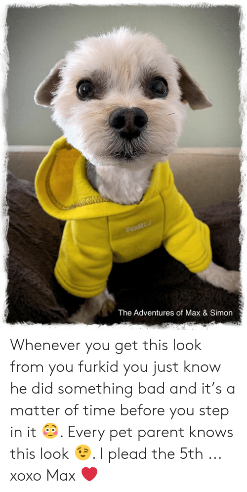 Bad, Memes, and Time: The Adventures of Max & Simon Whenever you get this look from you furkid you just know he did something bad and it's a matter of time before you step in it 😳. Every pet parent knows this look 😉.   I plead the 5th ... xoxo Max ❤️