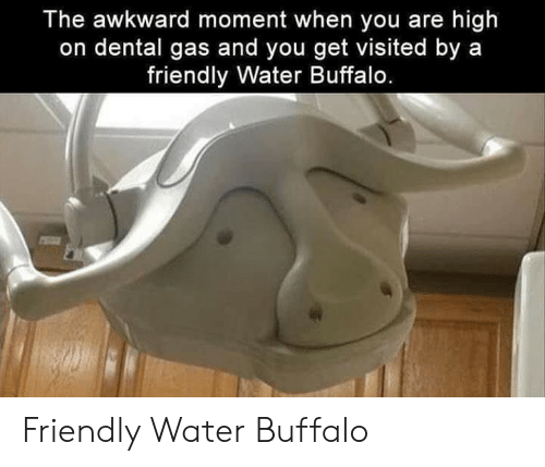 Awkward, Buffalo, and Water: The awkward moment when you are high  on dental gas and you get visited by a  friendly Water Buffalo. Friendly Water Buffalo