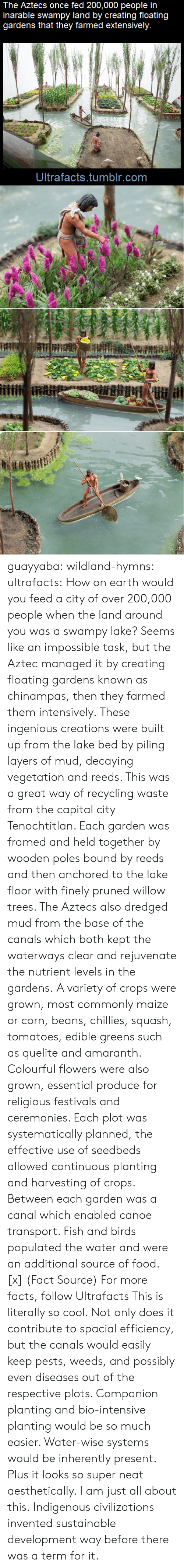 ingenious: The Aztecs once fed 200,000 people in  inarable swampy land by creating floating  gardens that they farmed extensively.  Ultrafacts.tumblr.com guayyaba: wildland-hymns:  ultrafacts:  How on earth would you feed a city of over 200,000 people when the land around you was a swampy lake? Seems like an impossible task, but the Aztec managed it by creating floating gardens known as chinampas, then they farmed them intensively. These ingenious creations were built up from the lake bed by piling layers of mud, decaying vegetation and reeds. This was a great way of recycling waste from the capital city Tenochtitlan. Each garden was framed and held together by wooden poles bound by reeds and then anchored to the lake floor with finely pruned willow trees. The Aztecs also dredged mud from the base of the canals which both kept the waterways clear and rejuvenate the nutrient levels in the gardens. A variety of crops were grown, most commonly maize or corn, beans, chillies, squash, tomatoes, edible greens such as quelite and amaranth. Colourful flowers were also grown, essential produce for religious festivals and ceremonies. Each plot was systematically planned, the effective use of seedbeds allowed continuous planting and harvesting of crops. Between each garden was a canal which enabled canoe transport. Fish and birds populated the water and were an additional source of food. [x] (Fact Source) For more facts, follow Ultrafacts   This is literally so cool. Not only does it contribute to spacial efficiency, but the canals would easily keep pests, weeds, and possibly even diseases out of the respective plots. Companion planting and bio-intensive planting would be so much easier. Water-wise systems would be inherently present. Plus it looks so super neat aesthetically. I am just all about this.   Indigenous civilizations invented sustainable development way before there was a term for it.