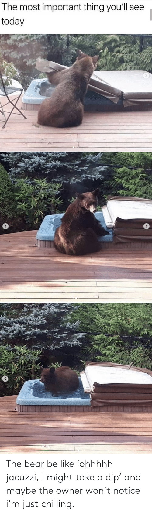 Bear: The bear be like 'ohhhhh jacuzzi, I might take a dip' and maybe the owner won't notice i'm just chilling.