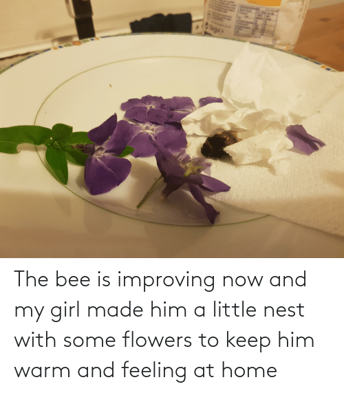 Nest: The bee is improving now and my girl made him a little nest with some flowers to keep him warm and feeling at home