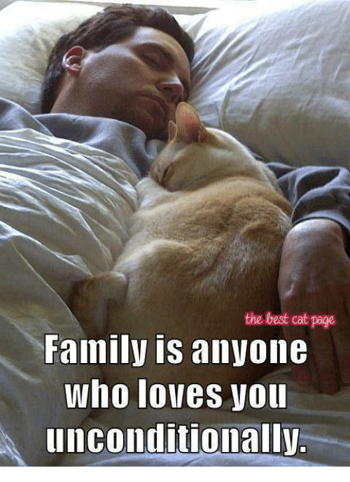 Memes, Best Cat, and 🤖: the best cat page  Family is anyone  Who lolles Vou  unconditionally